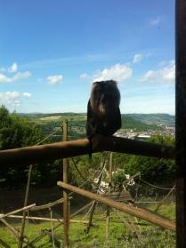 View of Belfast hiding behind a Belfast Zoo Monkey